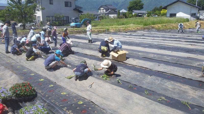 地区の子ども達と農作業